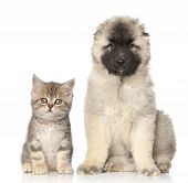 pic of puppy kitten  - Kitten and puppy in front of white background - JPG