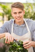 foto of prunes  - Handsome male florist pruning a plant in the greenhouse - JPG