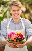 picture of flower pot  - Male florist holding flower pot in flowers shop - JPG