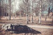 picture of birching  - Finland - JPG