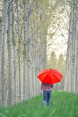 picture of walking away  - Woman with Red Umbrella Walking Away Through The Tree Alley on Cloudy Afternoon - JPG