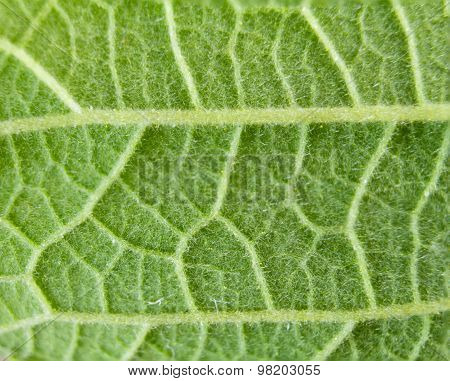 Fresh Green Leaf Texture