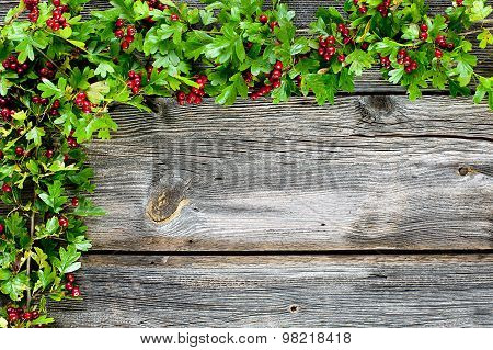 Hawthorn And Boards