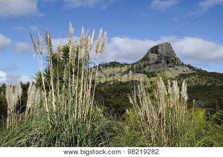 Mount Taratara - New Zealand