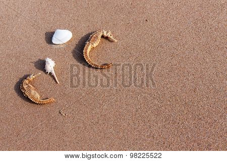 Sea Horse And Shell On Sand In Nature
