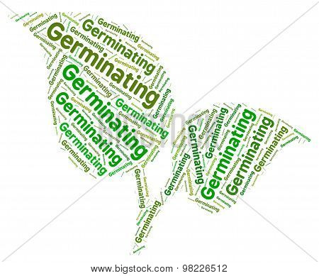 Germinating Word Shows Germination Cultivates And Germinates