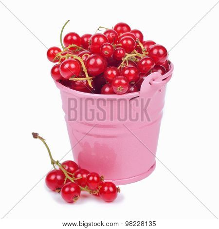 Red Currant Berries In Small Bucket