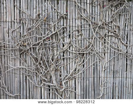 Old Vintage Wooden Overgrown Fence
