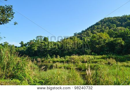 Beautiful Forest In Thailand
