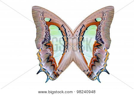 Texture Of Common Nawab Butterfly Wings