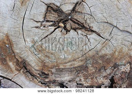 texture radial cut down a tree