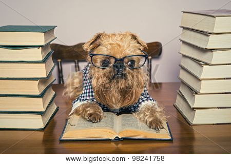 Serious Dog  Reads Books