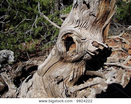 Hollow tree trunk