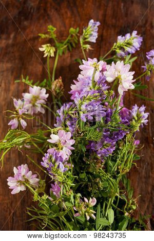Wild Flowers, Crown Vetch And Tufted Vetch