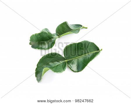 Kaffir Lime Leaves On White Background