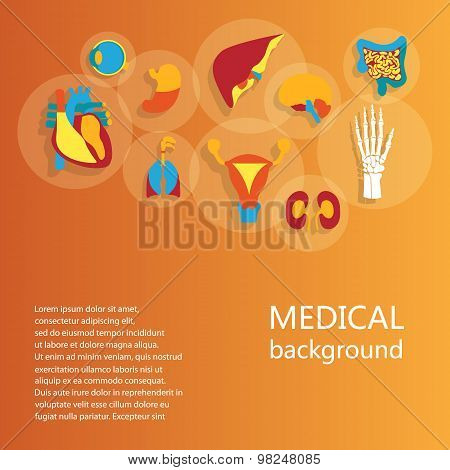 Concept of medical background. Human anatomy.