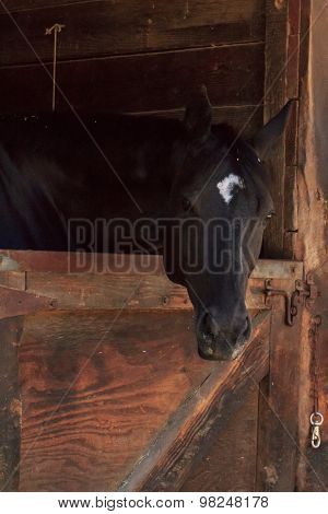 Brown bay horse in stable