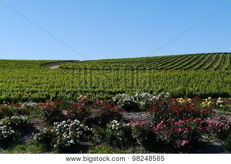 The South Australian wine vineyards