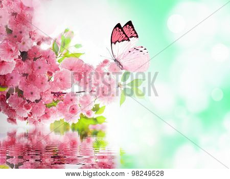 Cherry blossom and butterfly.