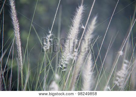 Wild plant spica soft focus