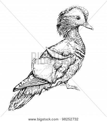 Mandarin duck. Vector illustration