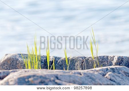 Grass Growing Close To The Sea