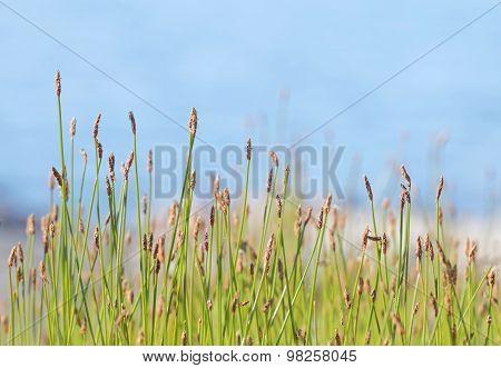 Vegetation In Front Of Defocused Sky