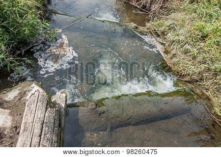 Freshwater Stream 3