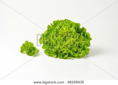 head of fresh butterhead lettuce on white background