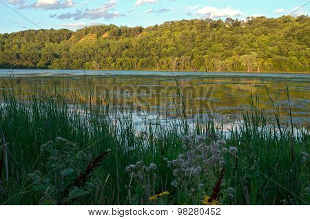 Pickerel Lake And Forest Of Lilydale Park