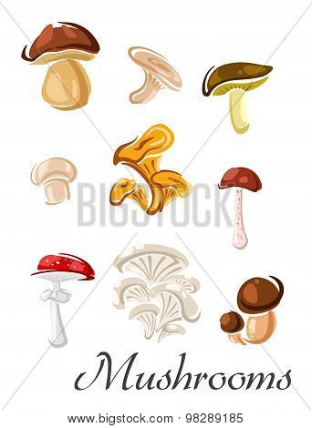 Forest mushrooms set in cartoon style