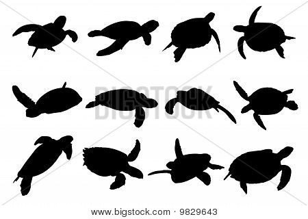 Turtle Vector Silhouettes.