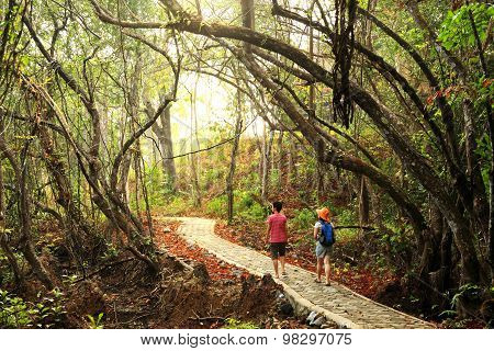 Walk Way In Rainforest Of Tarutao National Marine Park, Islands Located In The Andaman Sea, Off The