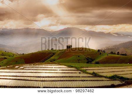 rice fields on terraced- terraced rice fields.