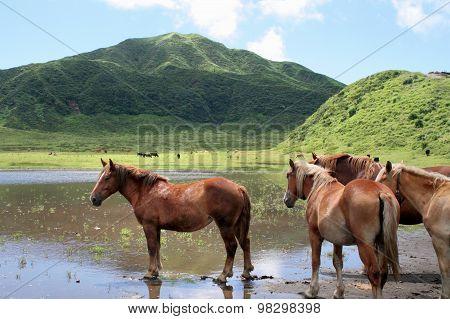 Horses, Kusasenrigahama, Japan