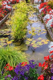 image of garden eden  -  Small pond - JPG
