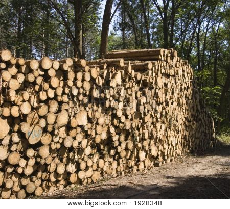 Pulp Wood Pine Logs