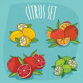 Set Of Isolated Cliparts Organic Citrus Fruits poster