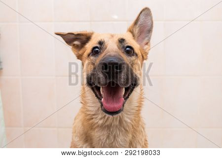 poster of Bathing Of The Funny Mixed Breed Dog. Dog Taking A Bubble Bath. Grooming Dog.