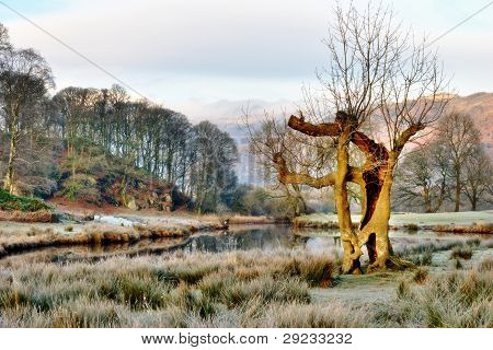 Trees Standing Sentinel