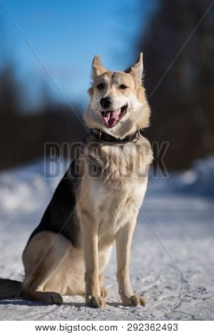 poster of Cute Mixed Breed Dog Outside. Mongrel In The Snow