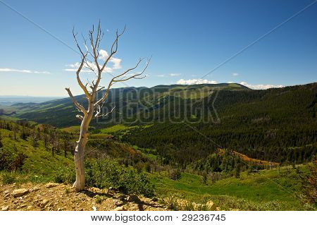 Barren White Tree Views The Wyoming Mountains