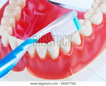 A dental model with a toothbrush when brushing teeth. Brushing teeth prevents tooth decay.