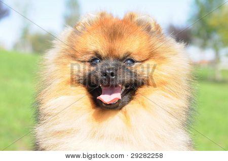 Portrait Of Happy Dog