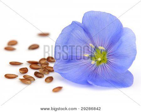 Flor de linho