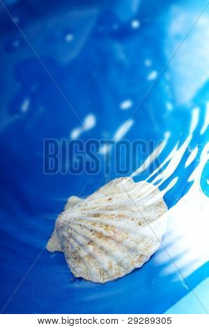 Shell In The Water