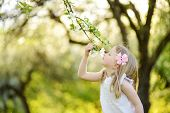 Adorable Little Girl In Blooming Apple Tree Garden On Beautiful Spring Day. poster
