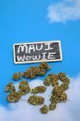 Marijuana. Cannabis. Recreational and Medical Marijuana Buds. Blue sky background with a small chalk poster