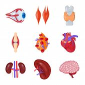 Vector Illustration Of Anatomy And Organ Logo. Collection Of Anatomy And Medical Vector Icon For Sto poster