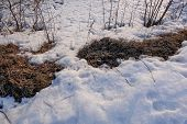 Thawed Patch. The Melted Snow Exposed Last Year's Autumn Dried, Withered Foliage. Spring Soon. Snow  poster